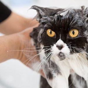 Comment me donner le bain