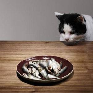 Pourquoi mon chat vole-t-il de la nourriture ?