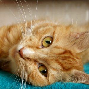 comment prendre soins de mon chat agé