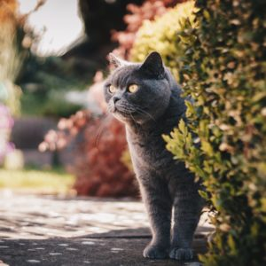 Printemps : Protégez votre chat !